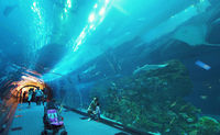 People admire the marine life in the glass tunnel of the Aquarium in Dubai Mall