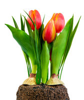 Spring deco with artificial tulips isolated on white