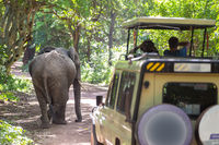 Wild african elephant beeing observed by tourist from open roof jeep on wildlife safari.