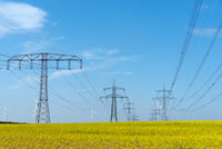 Power supply lines in a field of flowering oilseed rape seen in rural Germany