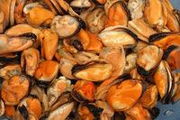 Mussels Sea Food