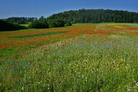 Landscape on the Swabian Alb with poppy and cornflower meadow