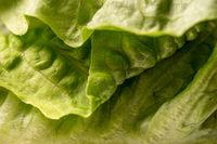 crispy green organic lettuce leaves, full frame