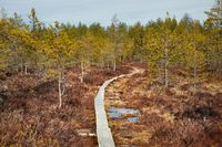 Swamps in Finland