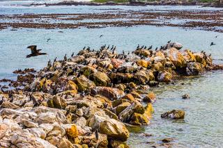 Big boulders and seaweed