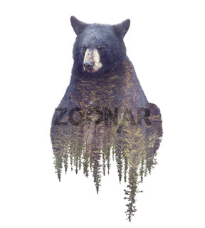 Bear and Forest. Watercolor Double Exposure effect