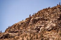 walk through the desert in Chile