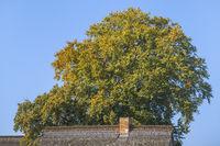 Born - The autumn tree at the house