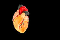 Model of human heart on black background