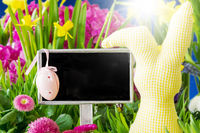 Sunny Spring Flowers, Easter Decoration, Copy Space