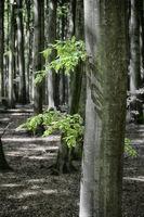 Spring in the ghost forest of Nienhagen