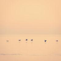 Pelicans Africa