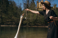 Girl feeds a large white swan on the shore.