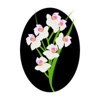 Mohit-Batch-5-Flower_Cymbidium Orchid_16.eps