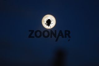 spider and moon