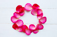 Rose petals on white  background.