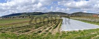Panorama einer Ebene mit Flächen eines Gartenbaubetriebes im Frühjahr