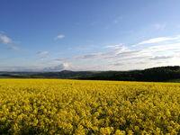The Erzgebirge in spring