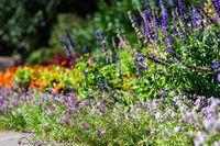 Blooming plants in a garden