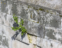 Tree sprouted in the wall