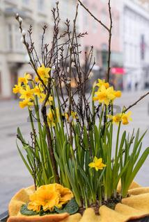 blühende Narzissen und Palmkätzchen - Blumenarrangement als Frühlingsdekoration