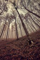 Bare trees against gloomy sky