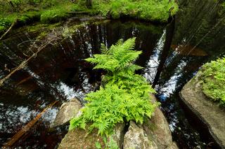 Fern in the forest creek landscape