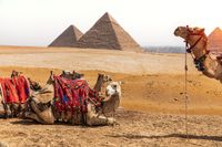 Camels and the Pyramids, Giza desert, Egypt