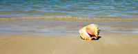 Sea shell on tropical beach. Travel background.