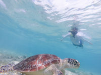 People on vacations wearing snokeling masks swimming with sea turtle in turquoise blue water of Gili islands, Indonesia. Underwater photo.