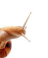 Part of snail isolated on white