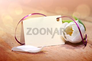White tulip and blank card for text on wood background.