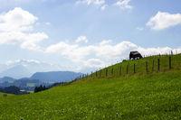 Bavarian Landscape 002. Germany