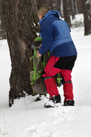 Hiker takes his backpack in snowy pine forest at winter