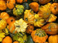 assortment of ornamental pumpkins