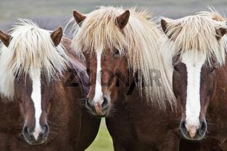 IS_Pferde_07.tif