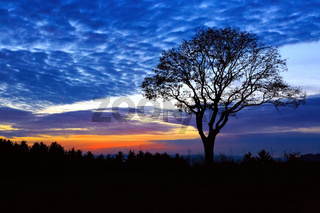Sunset and big old tree. Nature sunset background.