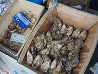 Fresh oysters on a market in Brittany.