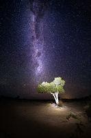 Desert tree under night sky milky way universe