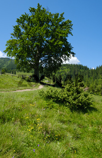 Carpathian mountain summer country landscape, Ukraine.