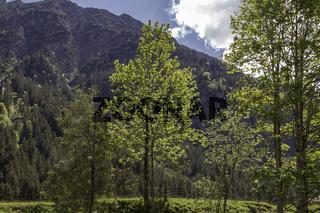 Frühling im Stillachtal bei Oberstdorf im Allgäu