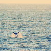 Whale Tail on Horizon