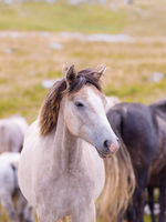portrait of beautiful wild horses