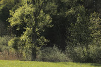 Naturschutzgebiet bei Fürth i.O.