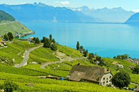 Wine-growing area Lavaux at Lake Leman, Riex, Vaud, Switzerland