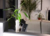 Plant in vase, home decoration