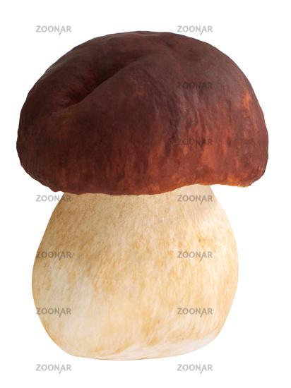 Cep porcino b. edulis mushroom, paths