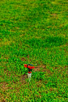 Lonely lawn sprinkler mounted in the grass
