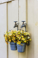 Bucket with flowers hanging on an aged faucet