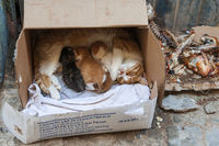 Street cat with her baby suckling cats in a cardboard box.
